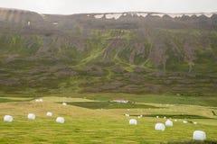 Icelandic green landscape Stock Photos