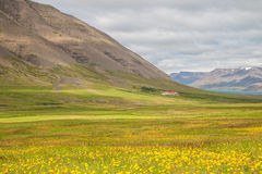 Icelandic green landscape Stock Photo