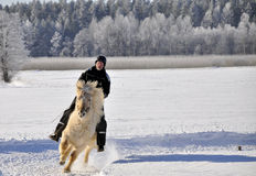 Icelandic horse competition Stock Photos