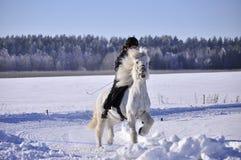 Icelandic horse competition Royalty Free Stock Image