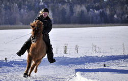 Icelandic horse competition Royalty Free Stock Photography