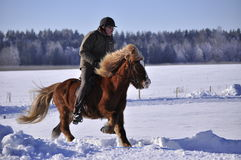 Icelandic horse competition Royalty Free Stock Photo