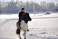 Icelandic horse competition Stock Image