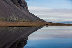 Icelandic horse refelcted in lake at mountain edge Stock Images