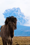 Icelandic horse and volcano. An Icelandic horse with the volcanic eruption in Eyjafjallajokull, 2010, in the background stock images