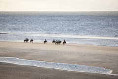 Icelandic horses on north seav beach of dutch island vlieland Royalty Free Stock Image