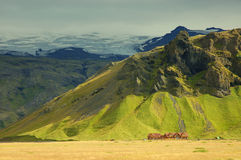 Icelandic landscape. Farm in Iceland near huge mountain with glacier Royalty Free Stock Photography
