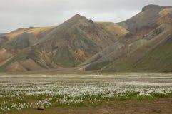 Icelandic landscape. The  beginning of  Landmannalaugar trek in Iceland in the summer Stock Image