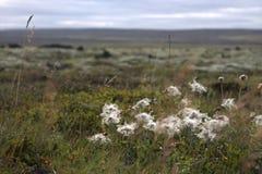 Icelandic landscape with outhwash plain Royalty Free Stock Photo
