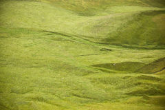 Icelandic landscape with sheep Stock Photography
