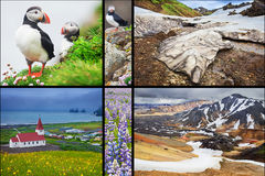 Icelandic landscapes collage. Photo collage from Iceland. Collage includes major natural landmarks like the Puffins on wesfjords, Landmannalaugar mountains and Stock Image