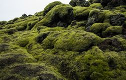 Icelandic Lava Field Landscape with Volcanic Rock Covered by Lush Green Moss Stock Photo