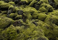 Icelandic Lava Field Landscape with Volcanic Rock Covered by Lush Green Moss Royalty Free Stock Photos