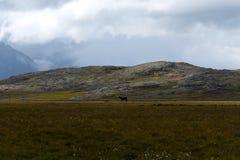 icelandic liggande Arkivbilder