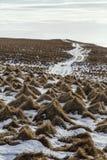 icelandic liggande Grimsey Arkivbilder