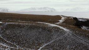 icelandic liggande Grimsey Royaltyfria Bilder