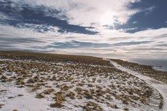 icelandic liggande Grimsey Arkivfoton