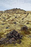 Icelandic moss covers volcanic rock Royalty Free Stock Images