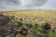 Icelandic moss covers volcanic rock Stock Images