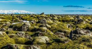 Icelandic moss environment timelapse sliding video stock video