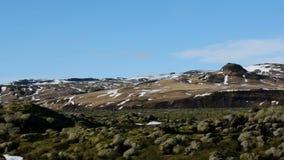 Icelandic moss environment timelapse sliding video stock video footage