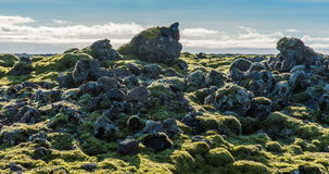 Icelandic moss environment timelapse sliding video stock video
