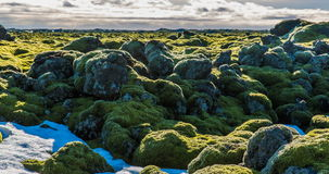 Icelandic moss environment timelapse sliding video stock video footage