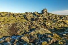 Icelandic moss Stock Image
