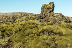 Icelandic moss. Landscape of Icelandic volcanic rocks covered by soft moss Stock Images