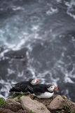 Icelandic puffin. Látrabjarg - westernmost point in Iceland Stock Photo