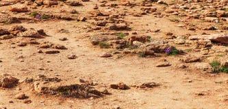 Icelands土壤和岩石荒原在Geysir附近 库存图片