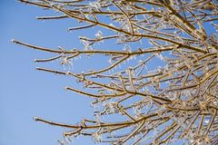 Icey Branches Royalty Free Stock Photos