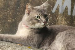 Ich bin eine graue männliche Katze lizenzfreies stockbild