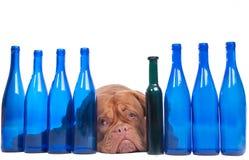 Ich denke, dass ich trank zu viel? Stockfoto