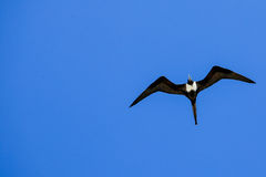 Ich fliege in den unbegrenzten Himmel Stockfotos