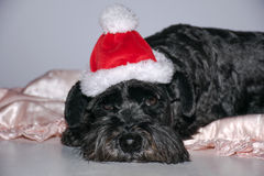Ich hasse Weihnachten Stockbilder