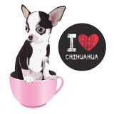 Ich liebe Chihuahua Stockfoto