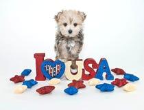 Ich liebe U S A Welpe Stockbilder