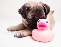 Ich und mein Freund - Welpenhund und -gummi ducky Stockbilder