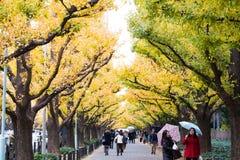 Icho Namiki街在东京,日本 免版税图库摄影