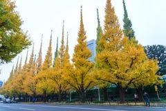 Icho Namiki/avenida del Ginkgo, Meiji Jingu Gaien Park, peop japonés Imagen de archivo libre de regalías
