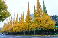 Icho Namiki/Ginkgo Avenue, Meiji Jingu Gaien Park, japanese peop. Le and tourists have a nice trip in  the autumn colors of The ginkgo tree is a yellow Royalty Free Stock Image
