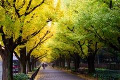 Icho Namiki/Ginkgoaveny, Meiji Jingu Gaien Park, japansk peop Royaltyfri Bild