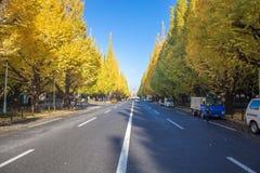 Icho Namiki ulica przy Tokio uliczny niedaleki Meiji Jingu Gaien który pięknego Ginkgo wzdłuż długości ulica w jesieni Fotografia Royalty Free