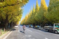 Icho Namiki ulica przy Tokio uliczny niedaleki Meiji Jingu Gaien który pięknego Ginkgo wzdłuż długości ulica w jesieni Zdjęcie Royalty Free
