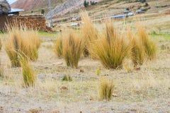 Ichu de Puno Photographie stock