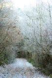 ici l'hiver Photo stock