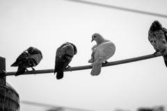 Ici le voyage commence des pigeons Photographie stock