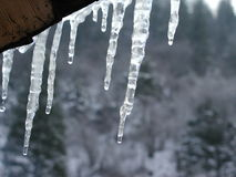 Icicle. Ice stock image