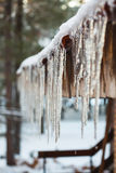 icicle Imagem de Stock Royalty Free